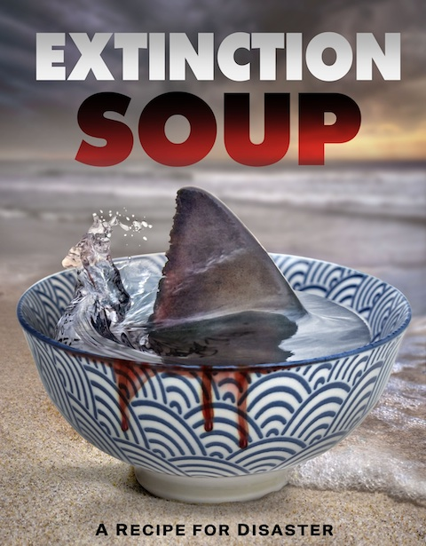WATCH THE FILM - A documentary about the devastating practice of shark finning and how Hawaii set the stage for shark fin trade bans around the world.