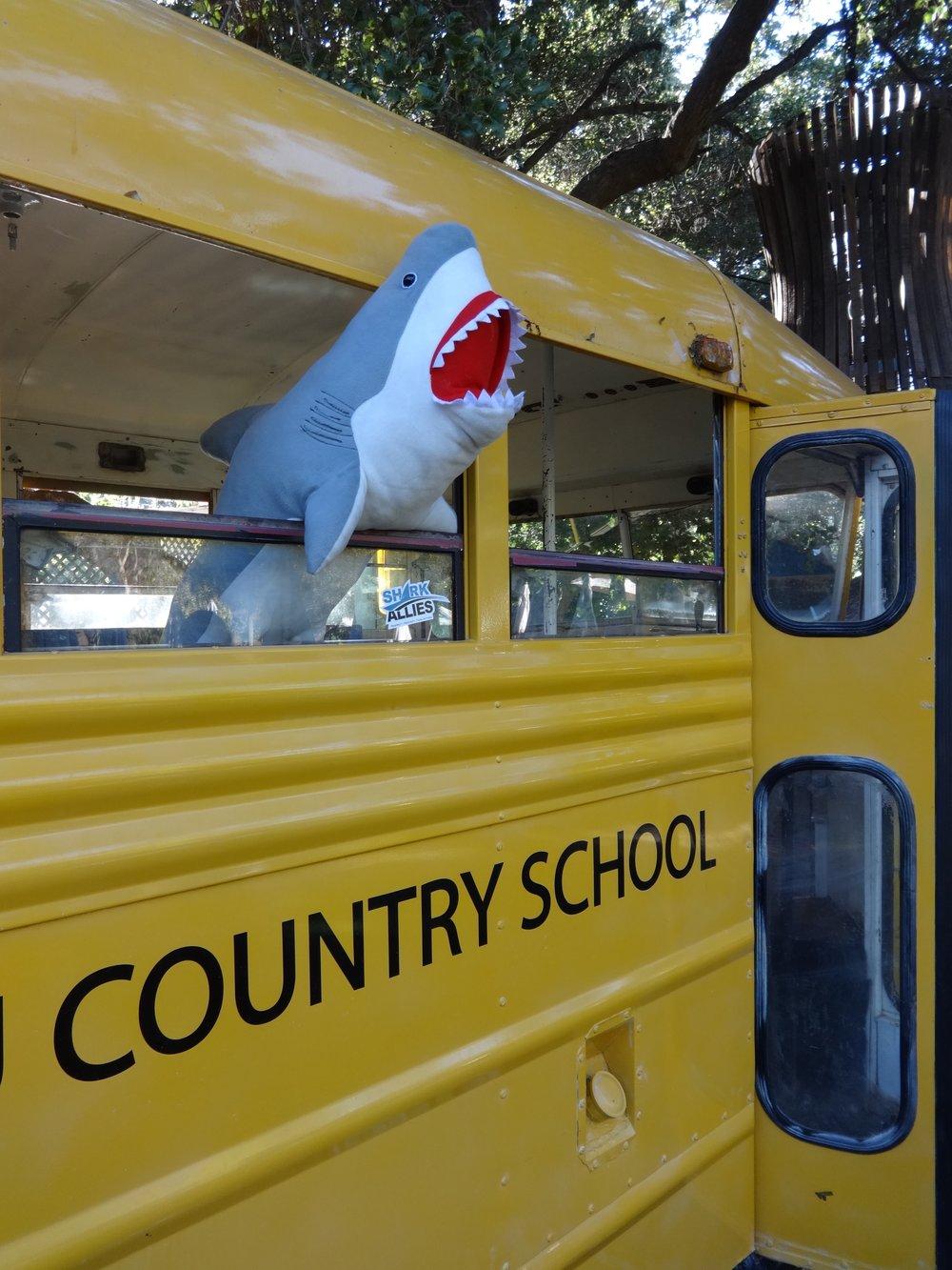 Shark pupil Malibu Wines shark event