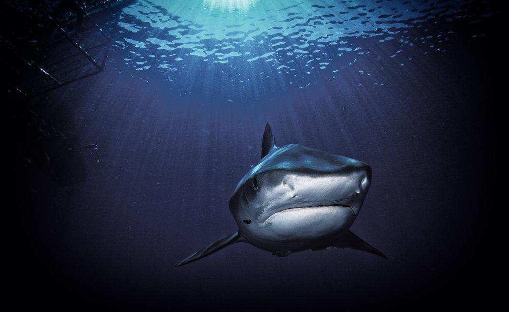 Shark Films.jpg