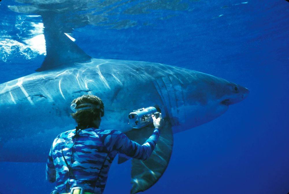 Jimmy Hall filming a Great White Shark in Hawaii