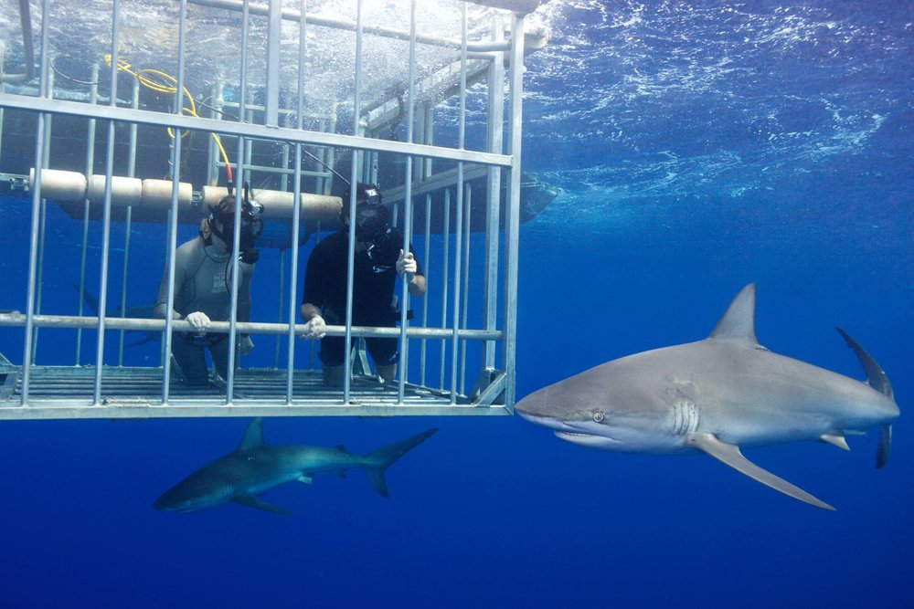 Mark Cuban Shark Week 1.jpeg