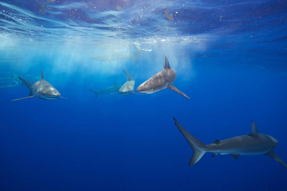 Mark Cuban Shark Week 2.jpeg