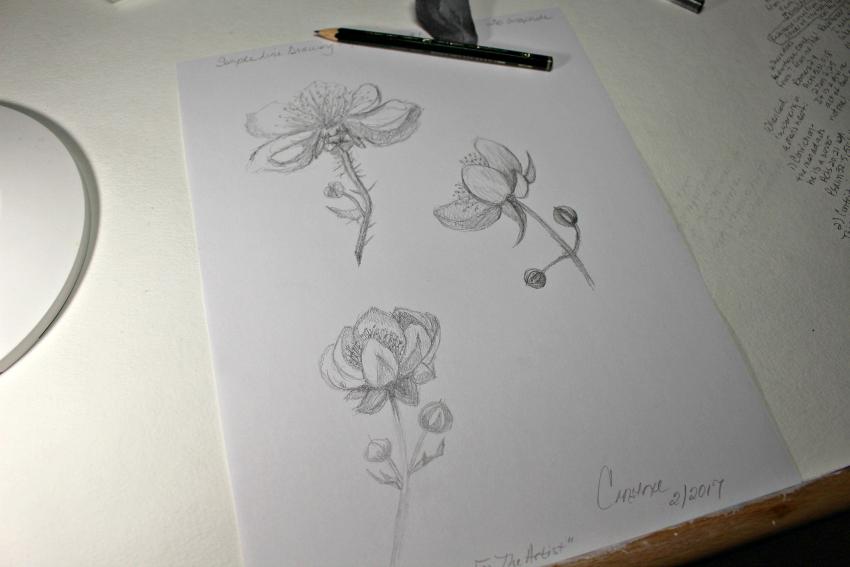 Simple Line Art Rose : Practice method simple line drawings constance reeder