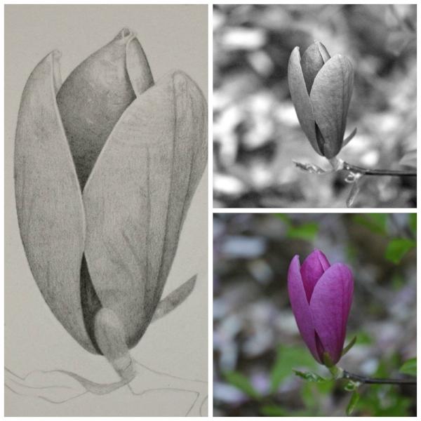 MagnoliaFinalCollage.jpg
