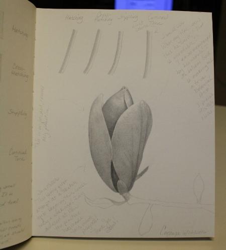 MagnoliaBudFinal1.jpg