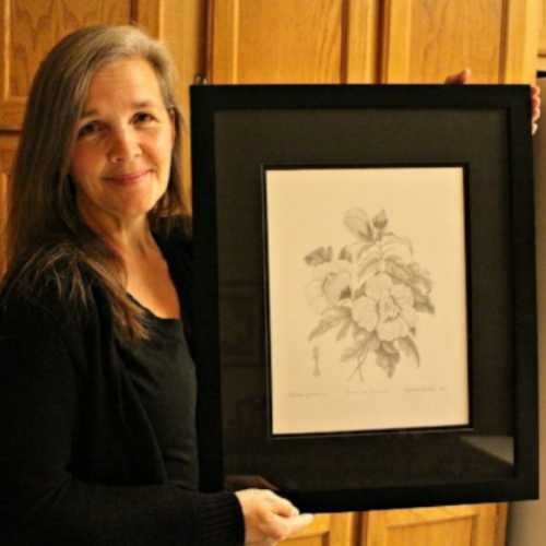 How I learned Botanical Illustrations in Graphite