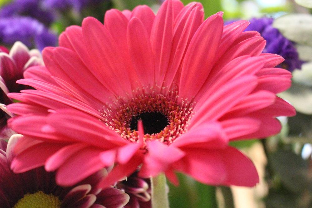 #112 Gerbera Daisy,Gerbera jamesonii