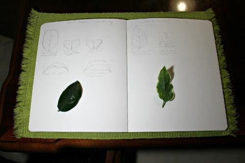 LeafPerspective1.jpg