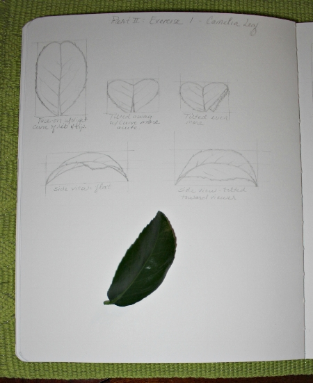 LeafPerspective3.jpg