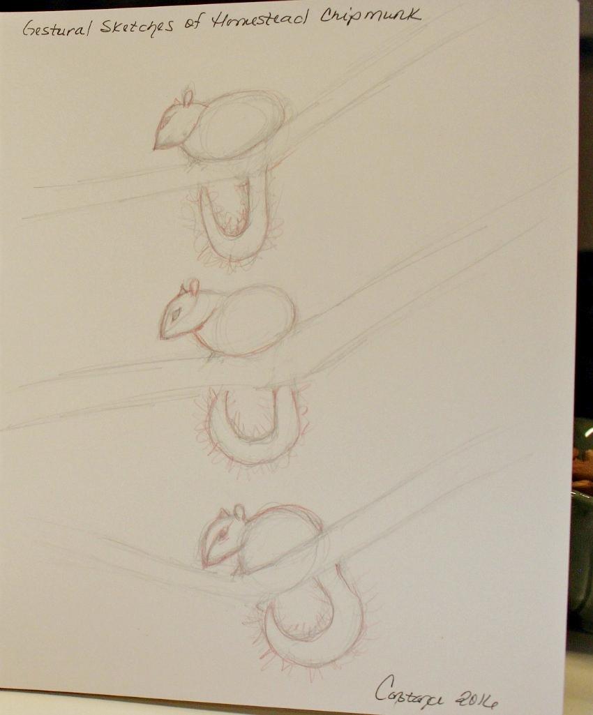 chipmunkgesturaldrawing2.jpg