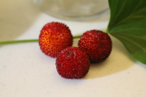 AStrawberryTreeFruit.jpeg