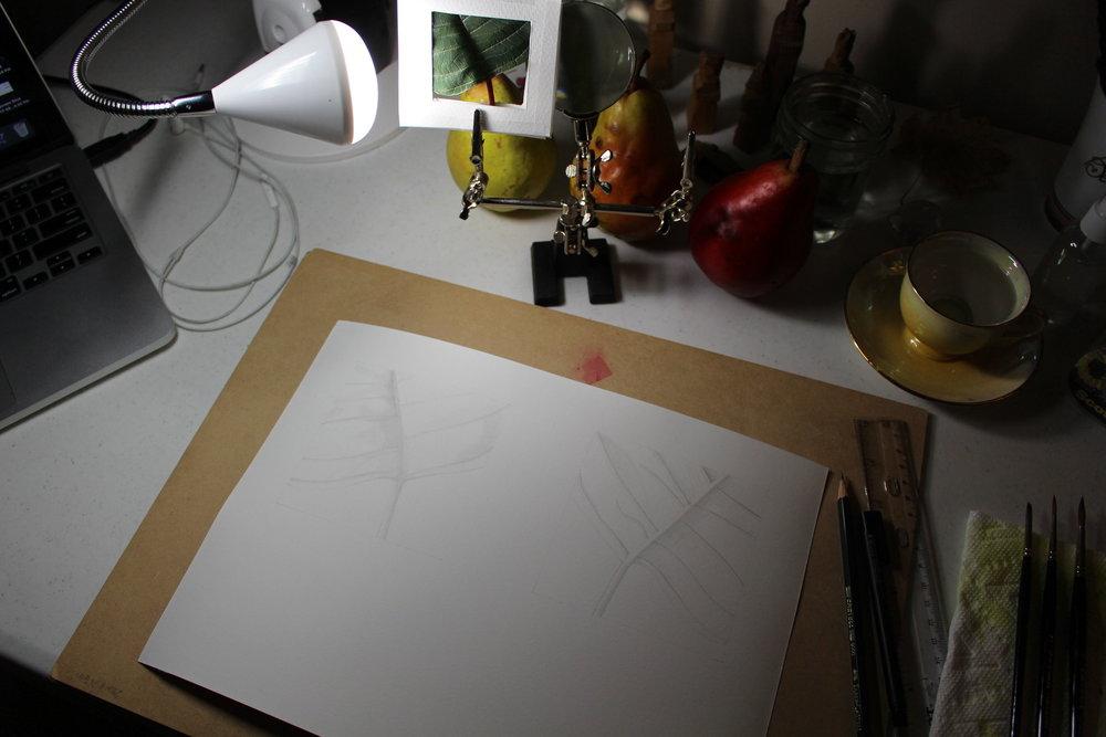 ALeafSketch1.jpeg