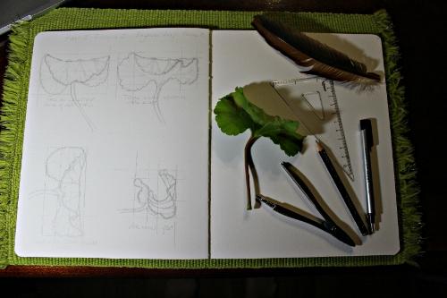 BegoniaPerspective2.jpg
