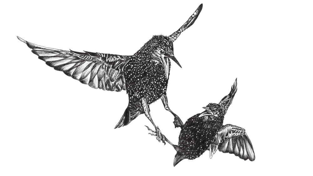 Screen Shot 2017-09-11 at 7.31.07 PM.png