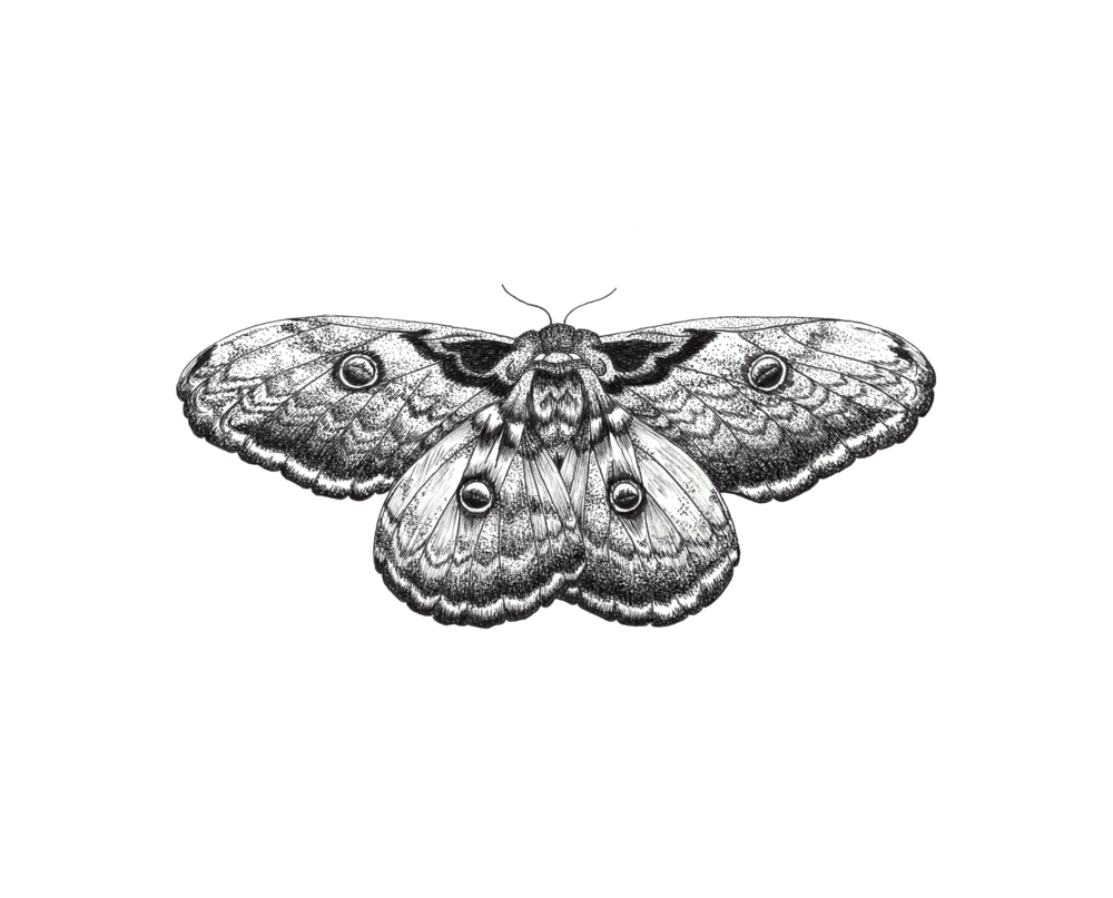 Screen Shot 2017-09-11 at 7.30.49 PM.png