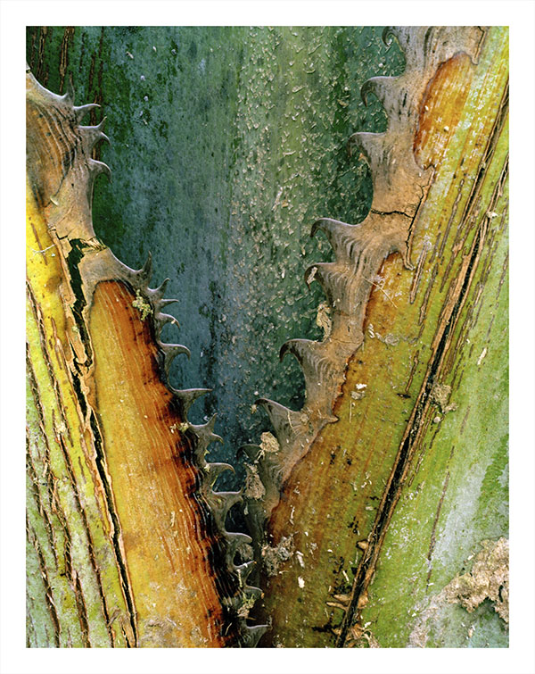 Banana Tree Trunk, close-up, 2010