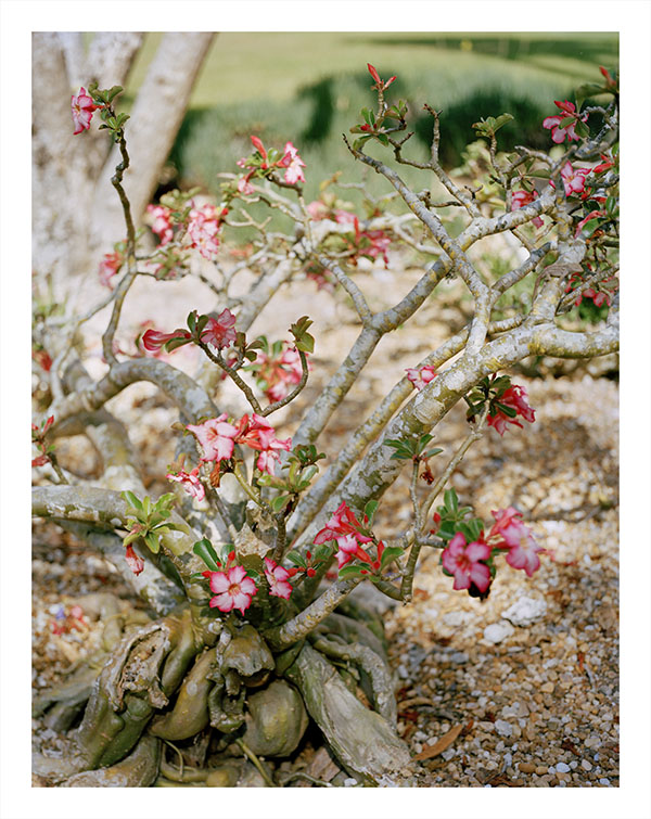 Flowering Bush, 2010