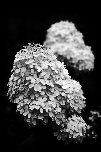CesarsPhotos_Georgia_Botanical_001_LowRes.jpg