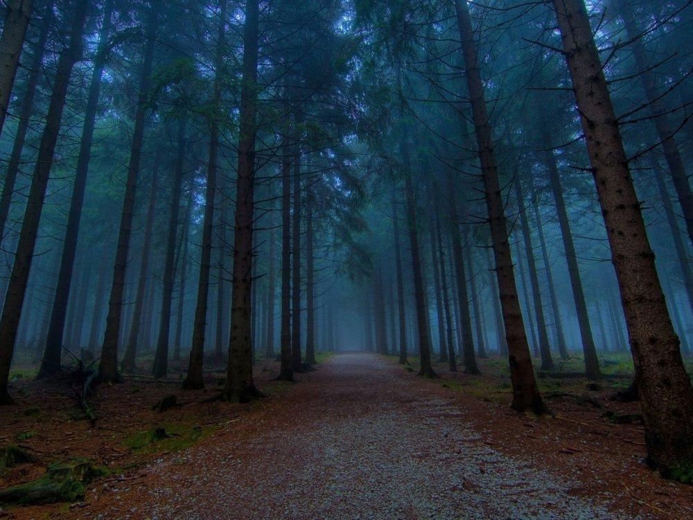 Dark-Woods-1280x960