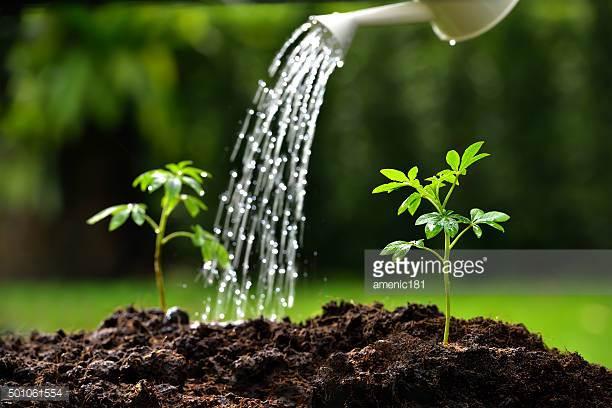 Johnston Gardening Services