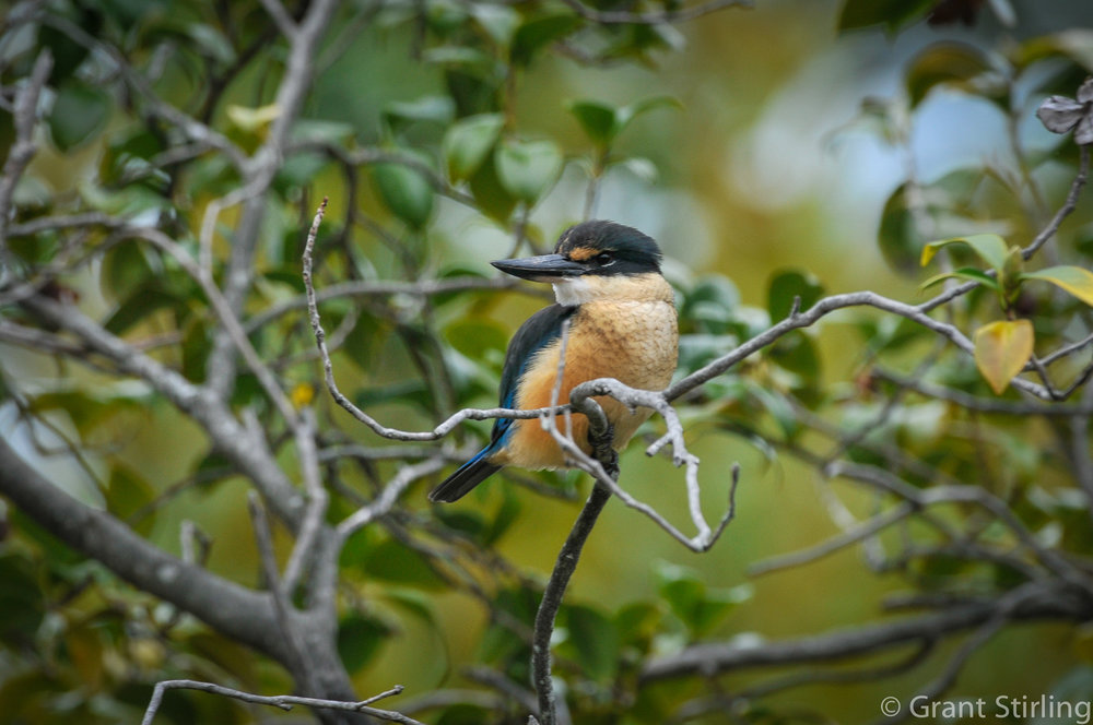 Kingfisher-3844-2.jpg