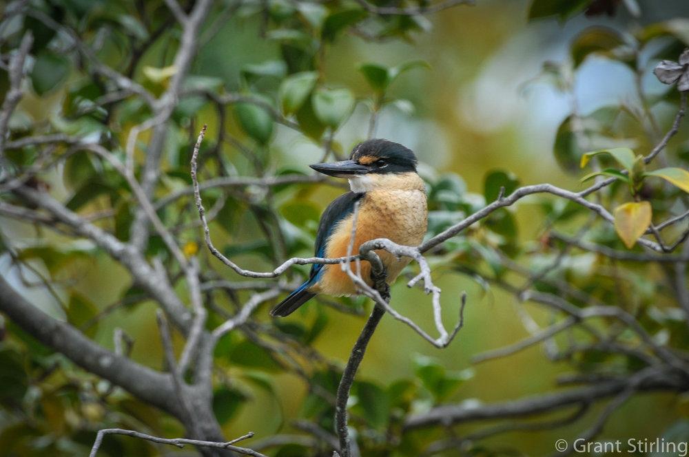 Kingfisher-3844-2.jpg