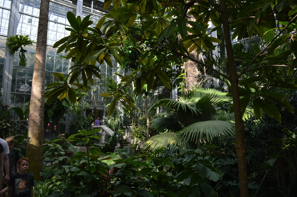 "From ""The Tropics"" room at the US Botanic Garden."
