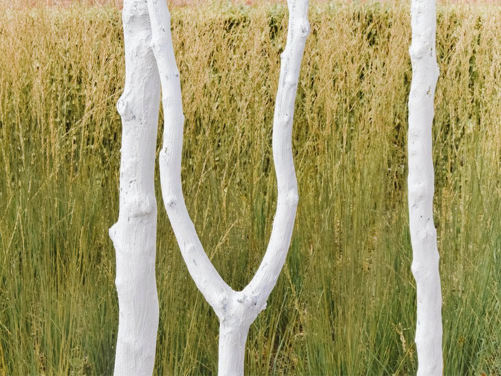 Bomen als kunst
