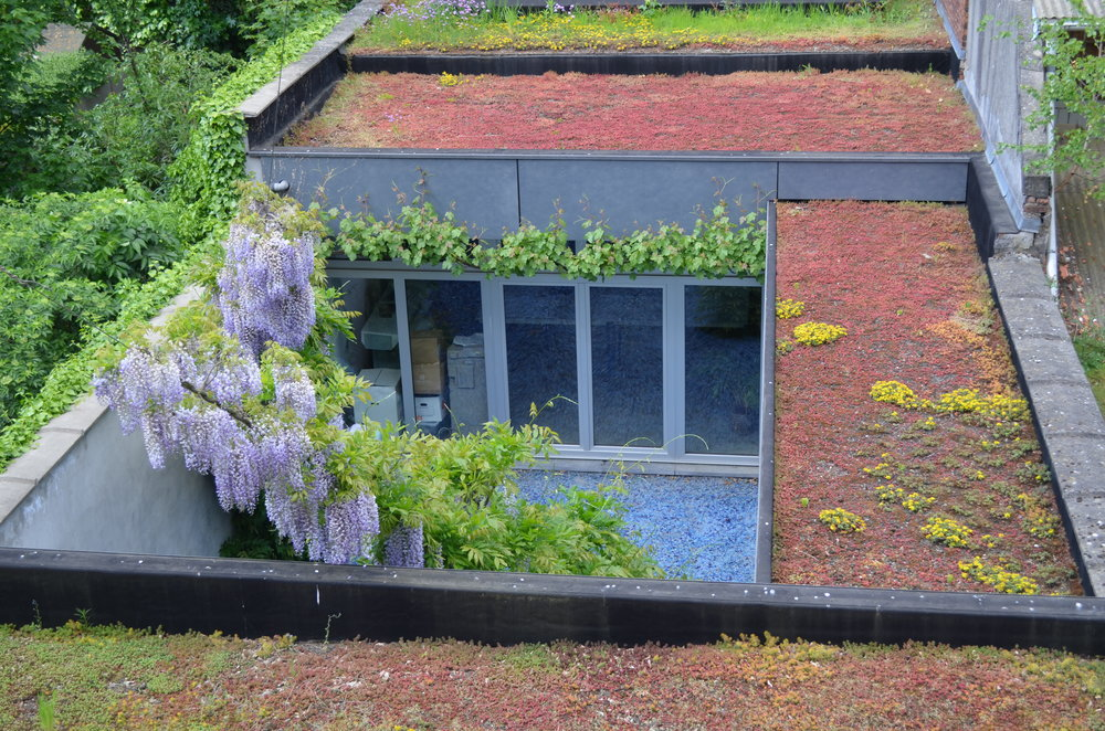 groendak-groengevel-klimplant.jpg