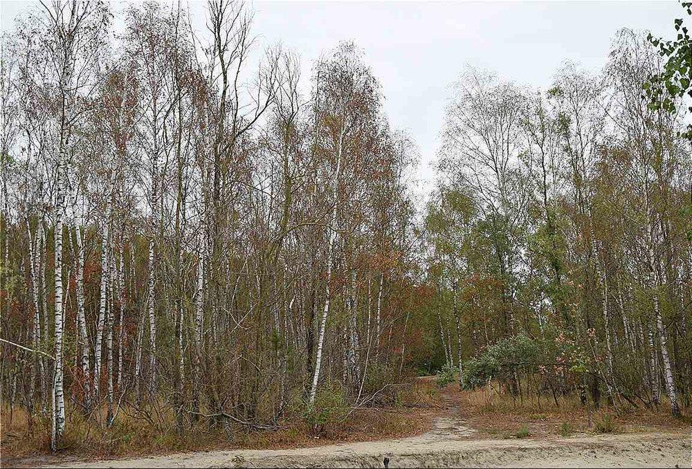 Foto einde juli 2018: Veel bomen laten nu reeds hun blad vallen om verdamping te beperken, andere bomen en struiken verdorren gewoon, en het is nog niet duidelijk wie het zal overleven
