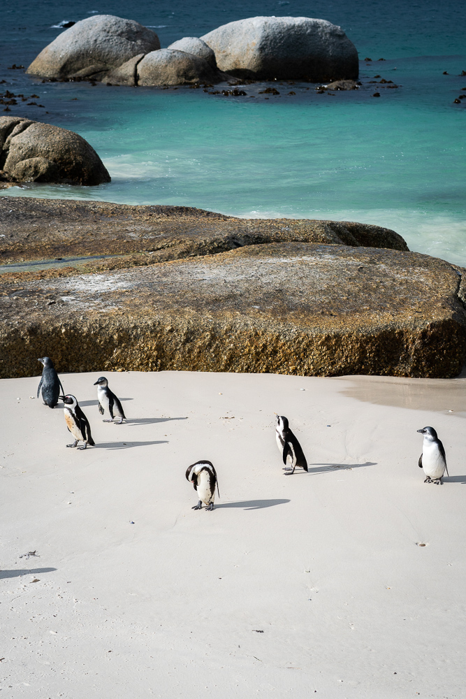 Cape Town and penguins!