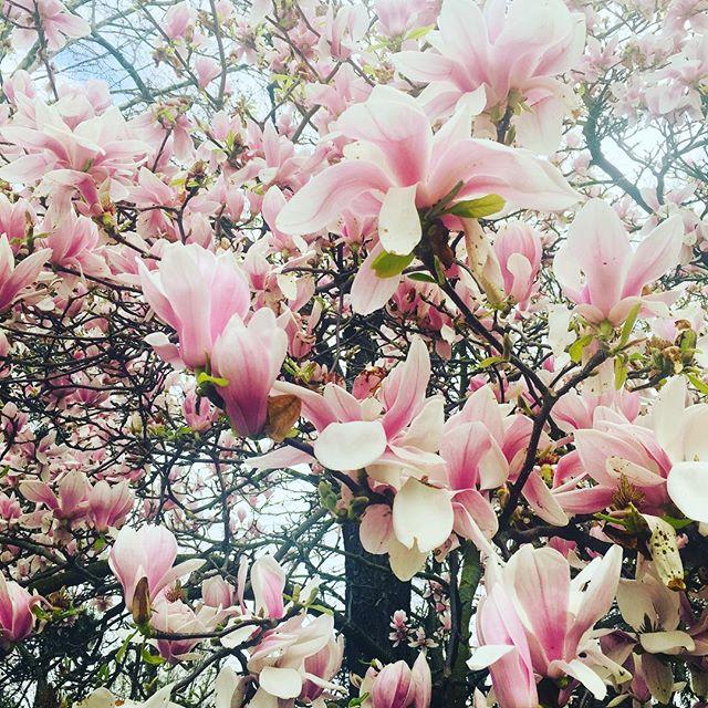 🌺😊. #printemps #spring #sunnyday