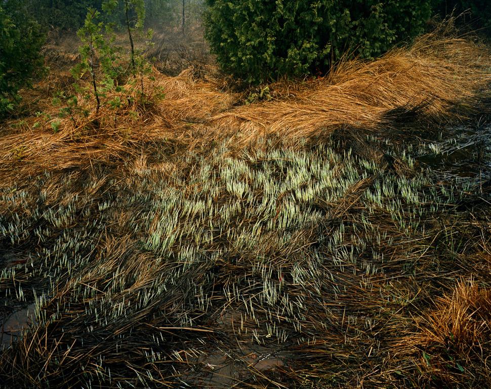 Grasses  Bruce Peninsula, Ontario, Canada, 1981