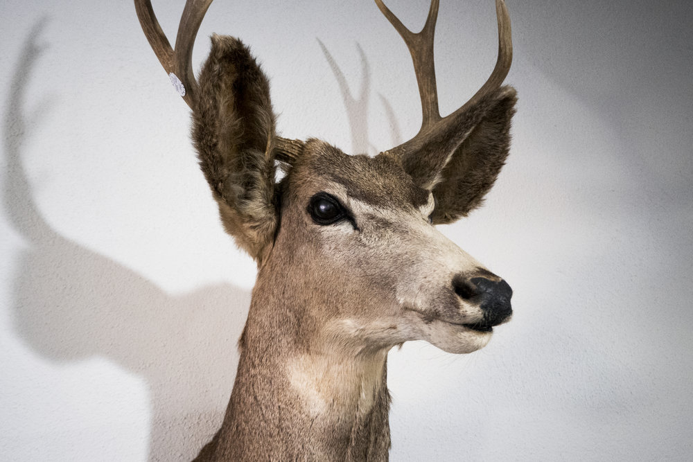 taxidermy.jpg