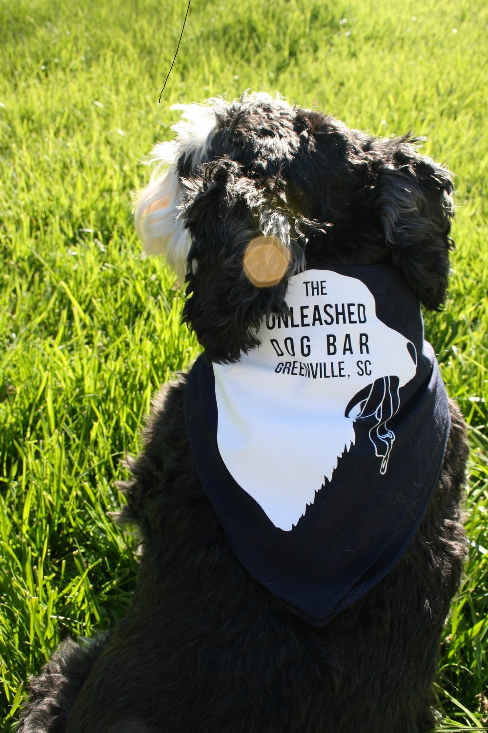 Seeking Full-time and Part-time Bartenders - As a bartender for The Unleashed Dog Bar, you will work in a fun, team-oriented, dog centric environment to provide the best experience for all our patrons (humane and canine)!We are looking for enthusiastic, dog loving individuals with previous bar, restaurant, hospitality, or other service industry experience.See below for job description details and how to apply!