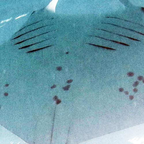 MV-MA-4131