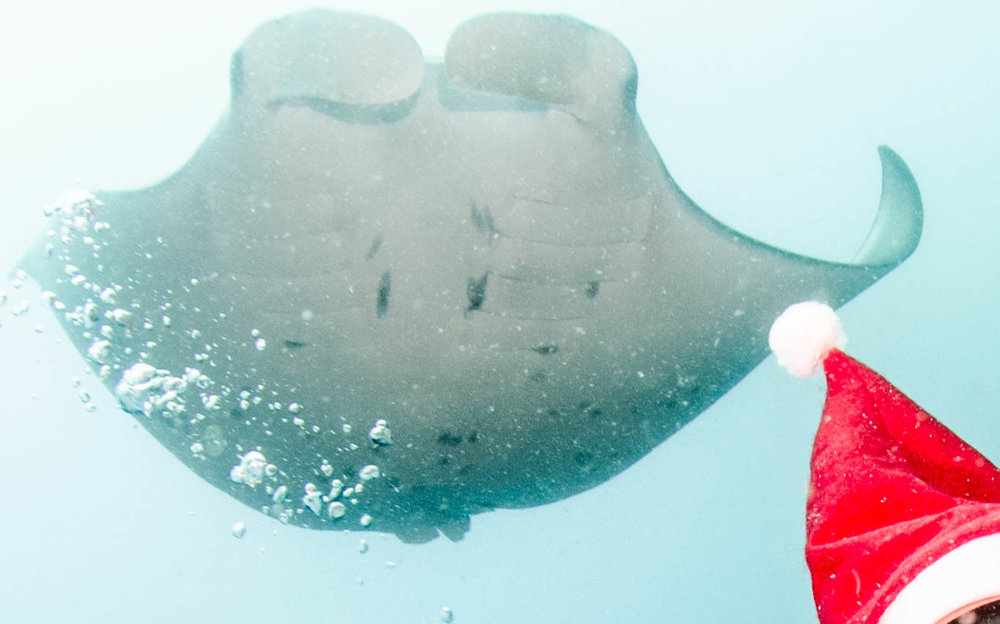 Sighted 24th December 2016. The Santa hat is not Photoshop'd - the diver between the manta and the photographer was wearing it to celebrate Christmas Eve. :)