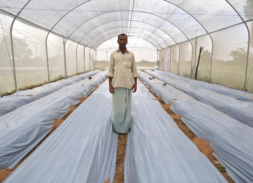 Farmer Appala Venkatesh had the largest yield of cucumbers of the Kheyti farmers during the last growing season. Here he stands with his newly-prepped rows, ready for planting capsicums.