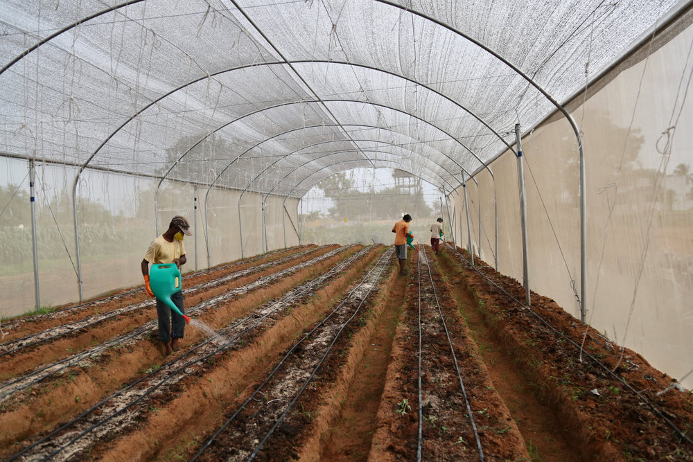 Innovative Greenhouses Help Farmers Adapt to Climate Change - With photographs by Sara Hylton. Published 4.11.18(this photo is mine)