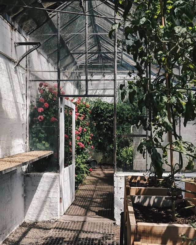 Another beautiful weekend. This one involved a sunny Sunday at Tyntesfield - glasshouses, iced coffees and shady nooks. Just keep theses weekend coming please 🙏🏻 #ihavethisthingwithglasshouses #WHPflowerpower