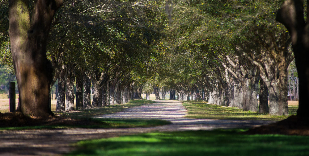 The Plantation   Is comprised of two adjoining tracts. The original Woodside Plantation contains 462 acres with the main house, most of the improvements, the quail woods and dove fields. The entire plantation covers 967 acres.   view more