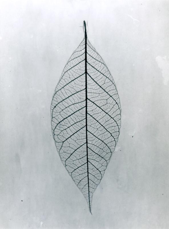 Leaf (2017) sm.jpg