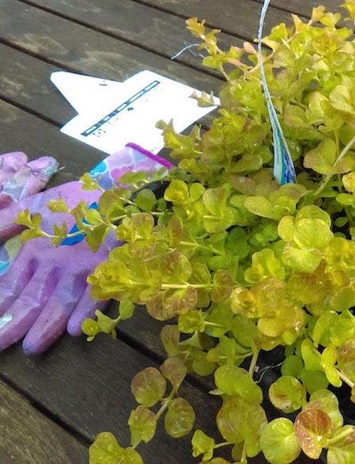 artemis_plants.jpg