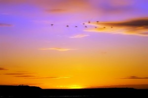 Brilliant Sunset, Bill Horden