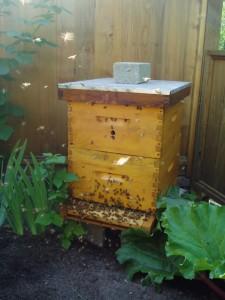 Bees Waiting