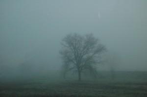 FoggyField2