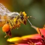 HoneyBeeCattailLegs