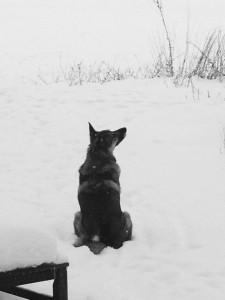 BWCoda_In_Snow