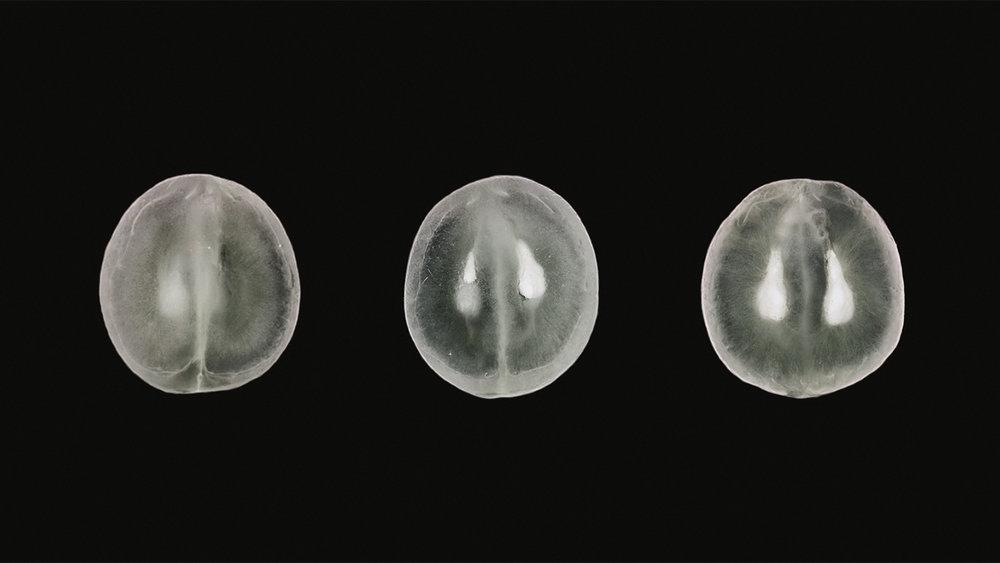 sisomo2-03.jpg
