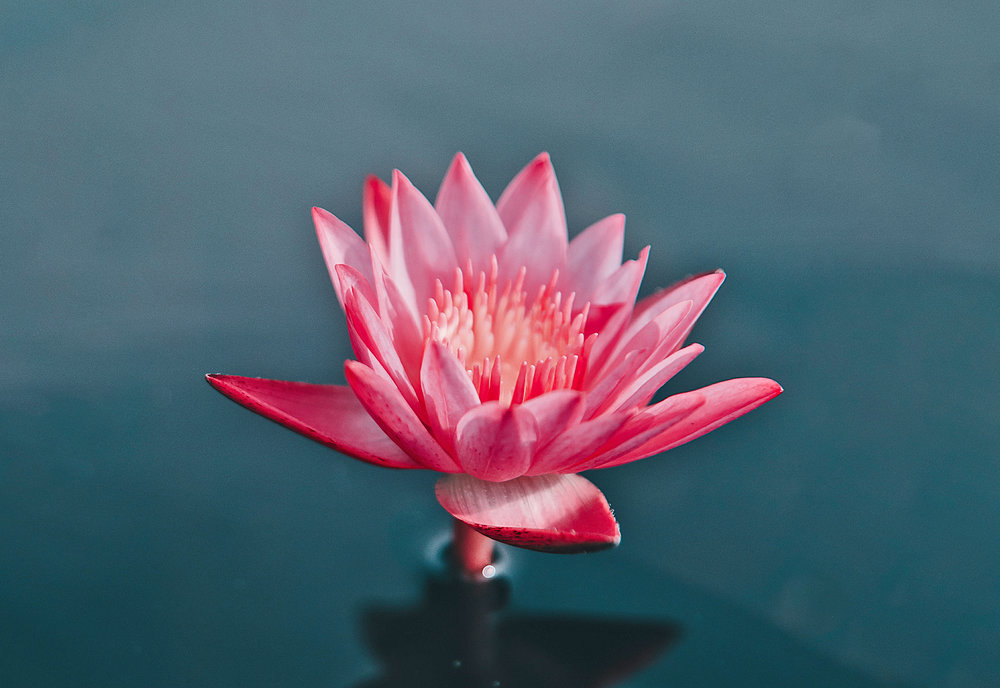 FlowerWaterLilly.jpg